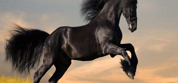 dark horse là gì