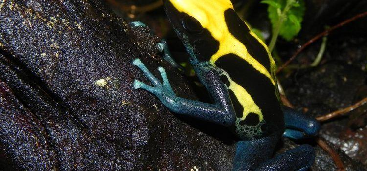 các loại ếch độc