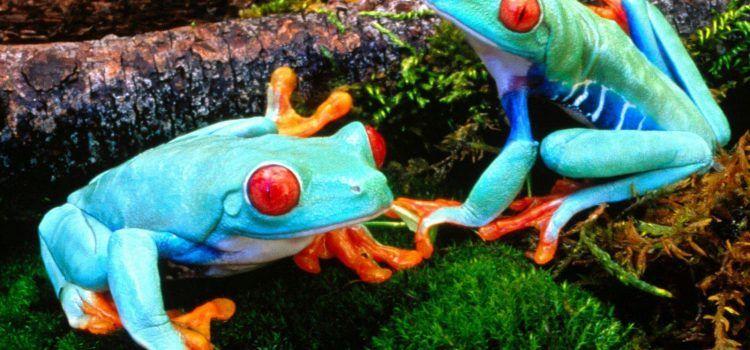 các loại ếch hiếm
