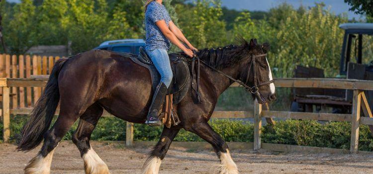 horsde riding là gì